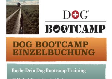 Dog Bootcamp Einzelbuchung