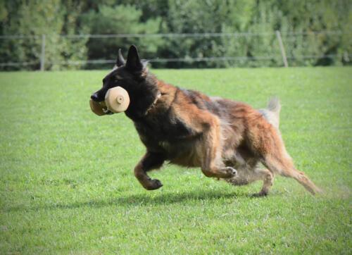 Hund14