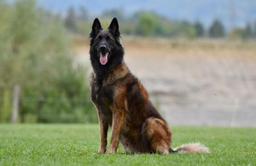 Hund15