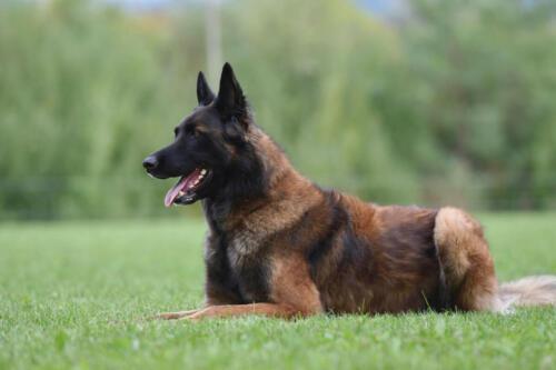 Hund16