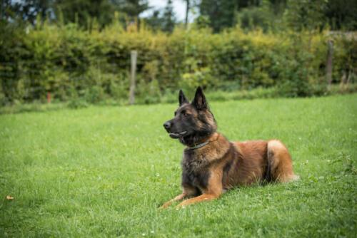 Hund18