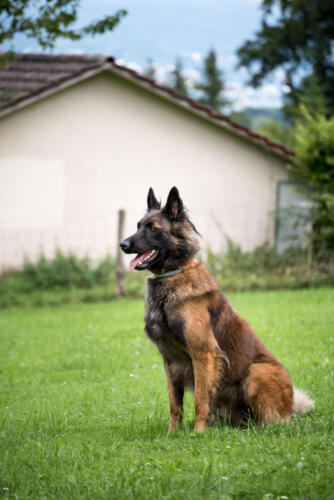Hund19