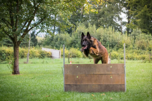 Hund21