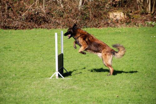 Hund24