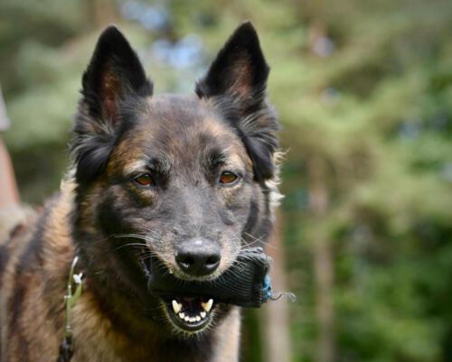 Hund29